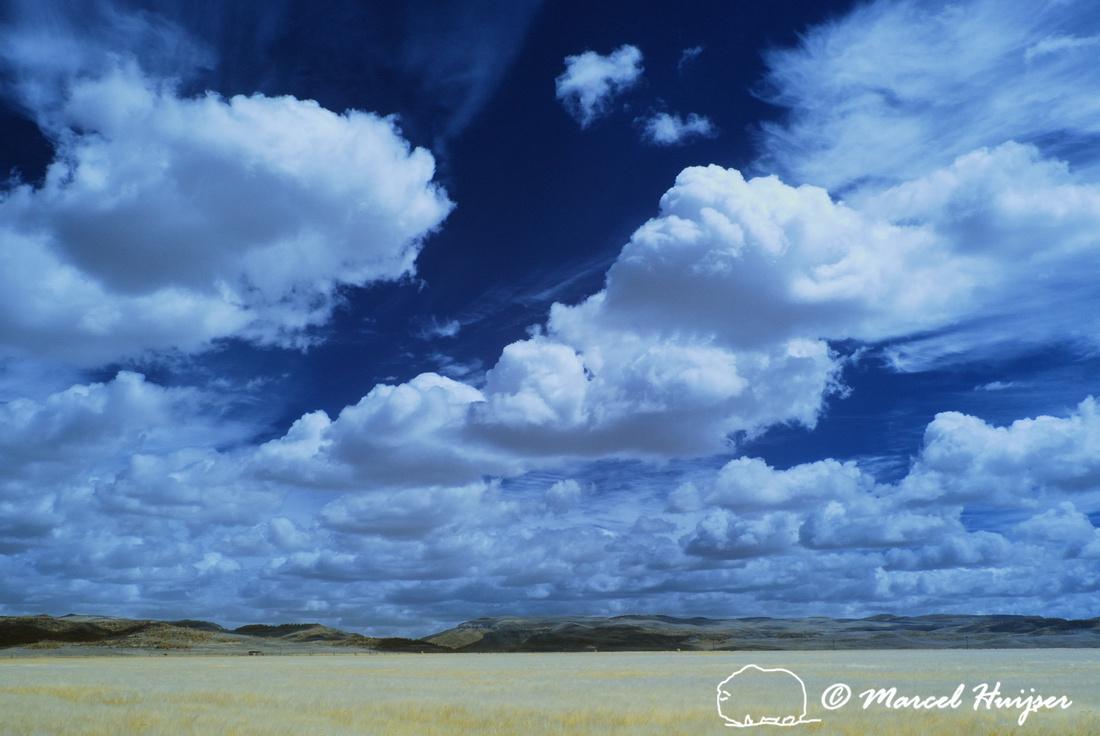 Wheat field and sky, Montana, USA