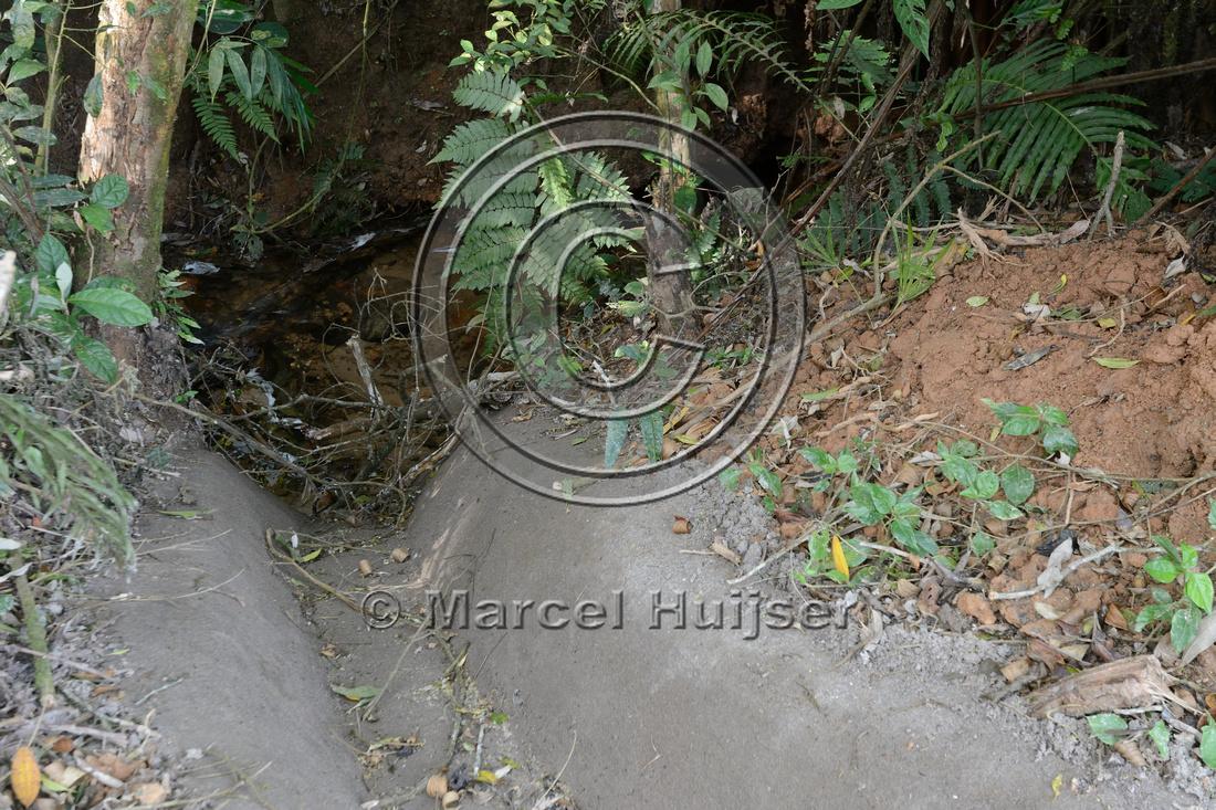 Road runoff is drained into stream, Parque Estadual 'Carlos Botelho', São Paulo, Brazil