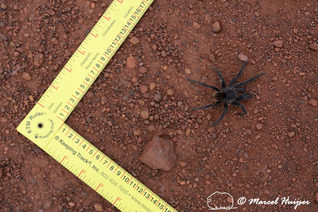 Spider, Parque Nacional Serra da Canastra, Minas Gerais, Brazil