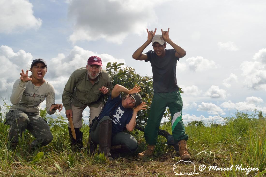 Karolyne Rodrigues (Onça-pintada), Marcel Huijser (ratão-do-banhado), Bethanie Walder (tatu canastra), and Joel Jesus Silva (veado-campeiro), Parque Nacional das Emas, Goiás, Brazil