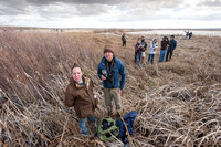 Observing the snow geese (Chen caerulescens) migration, Montana,