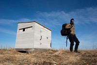Marcel Huijser leaves the blind at the greater prairie chicken l