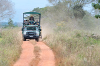 Eco tourism, viewing wildlife,  Pantanal, Brazil