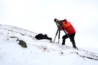 The making of the muskoxen images, Marcel Huijser photographing muskoxen (Ovibos moschatus), Dovrefjell National Park, Norway