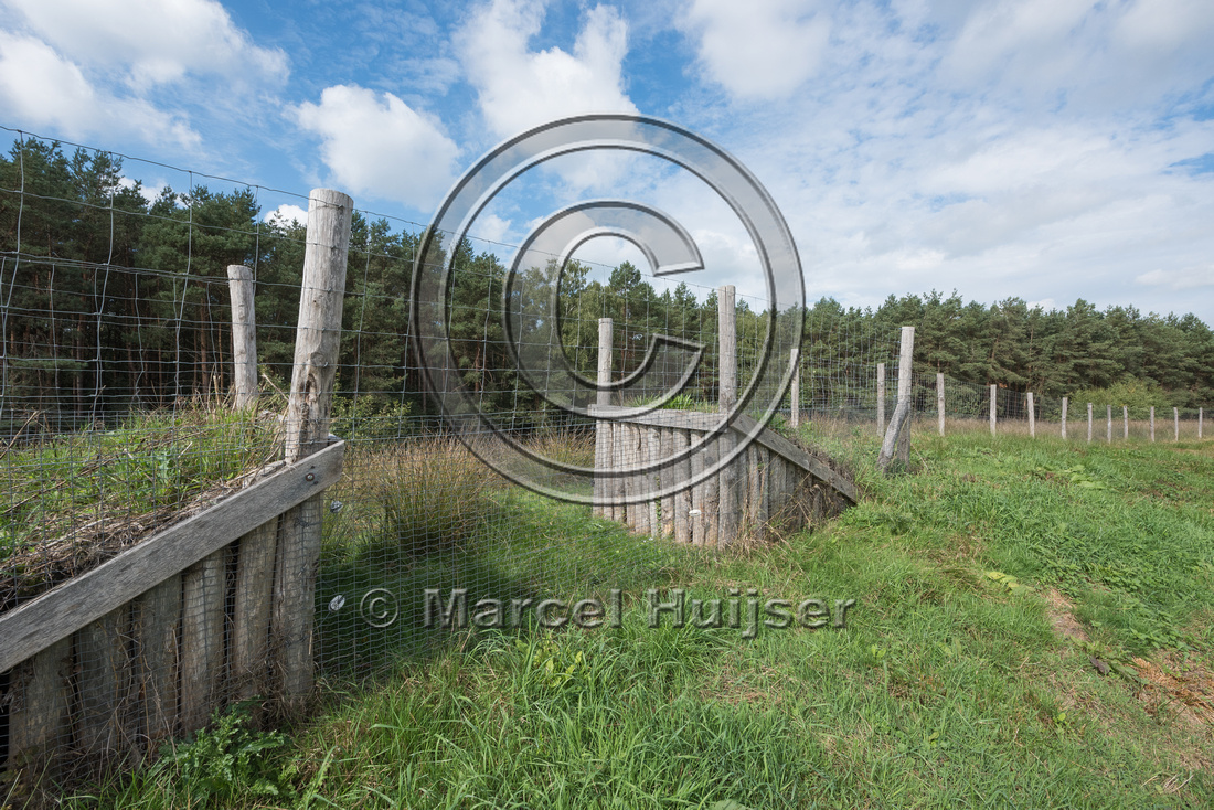 Wildlife fence and jump-out along A28 motorway, near Spier, Dren