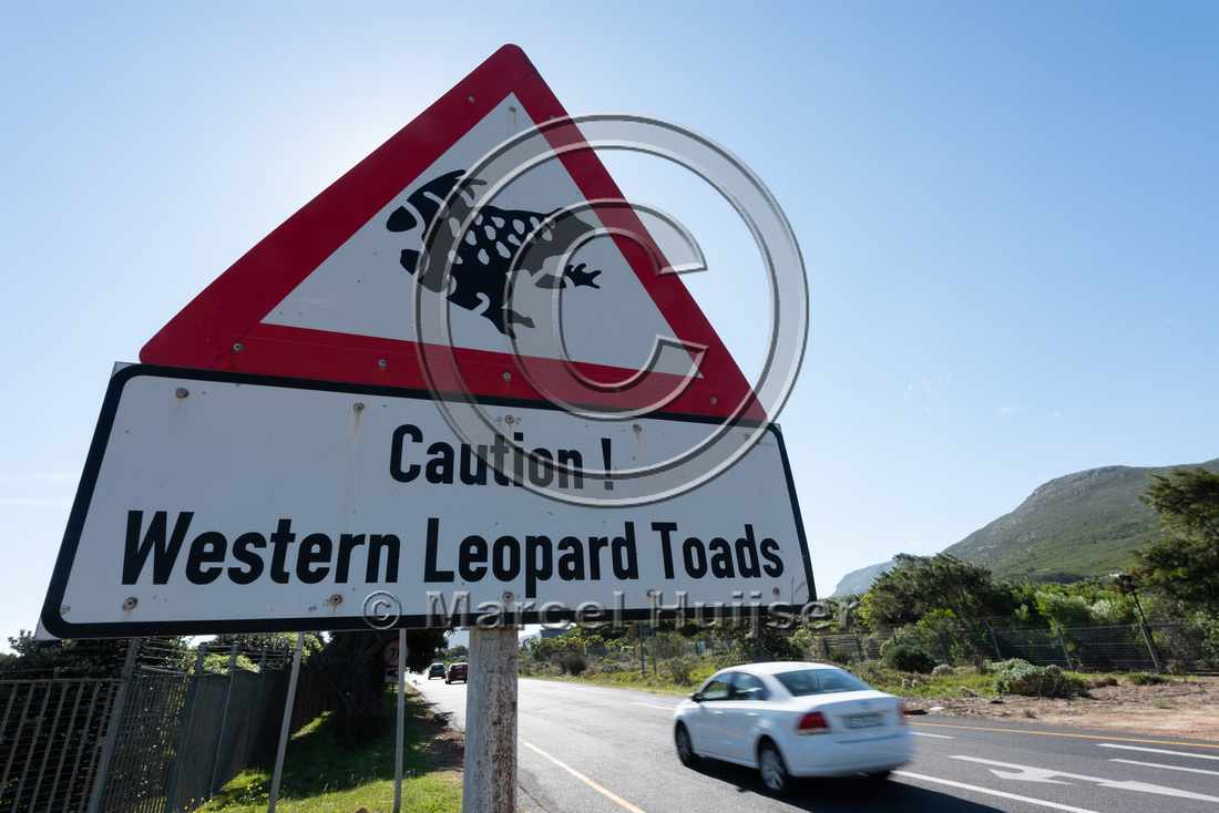 Warning sign for western leopard toads, near Cape Point, Western