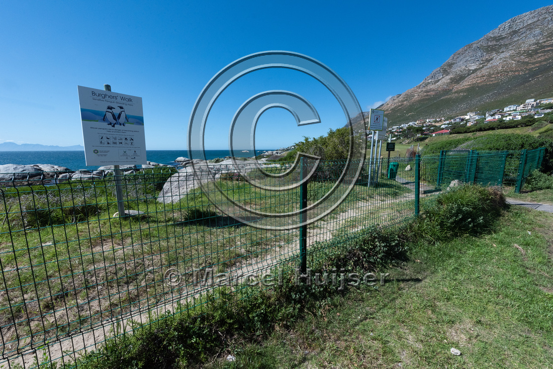 Penguin fence to keep penguins out of gardens, a golf course, an