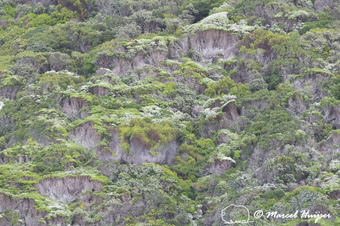 Fijnbos vegetation, Cape Point, Table Mountain National Park, We