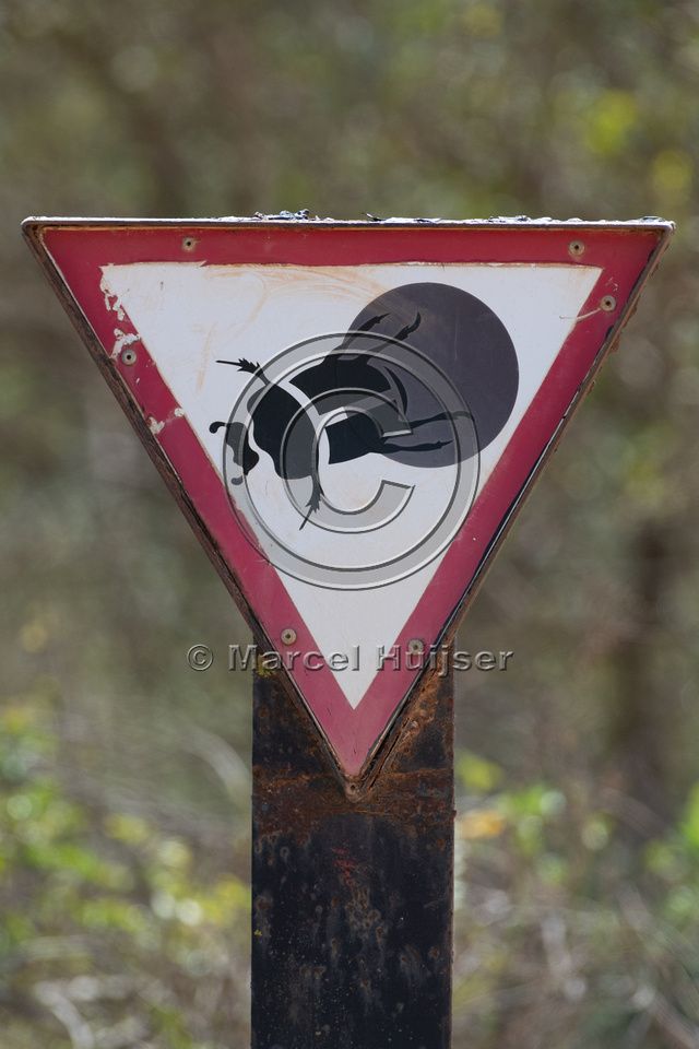 Warning sign for flightless dung beetle (Circellium bacchus), Ad