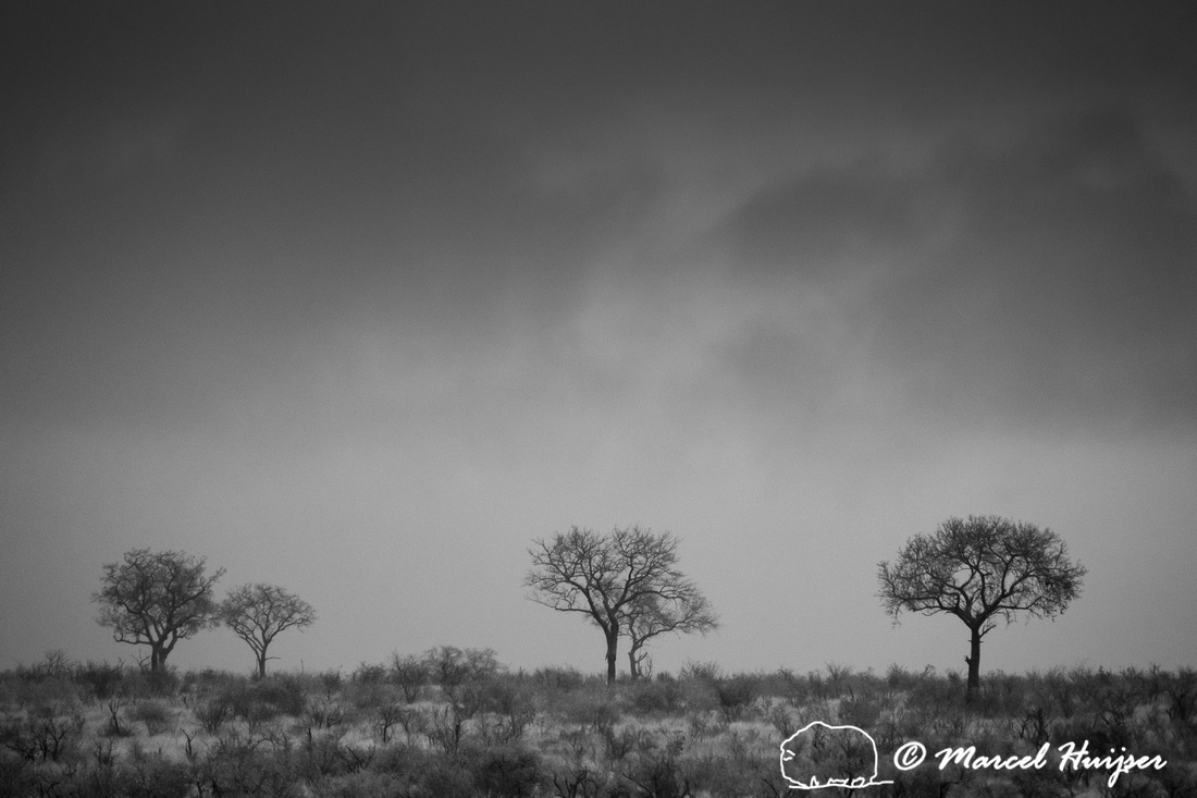 Trees and rain clouds, Kruger National Park, South Africa