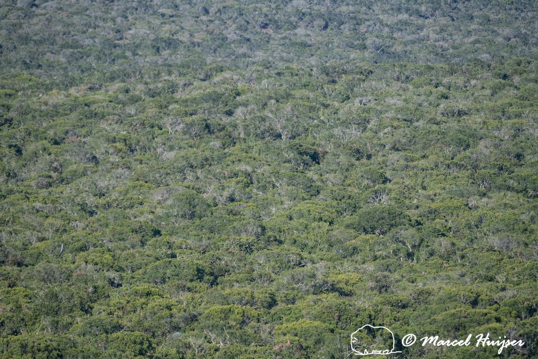 Vegetation, Addo Elephant National Park, Eastern Cape, South Afr