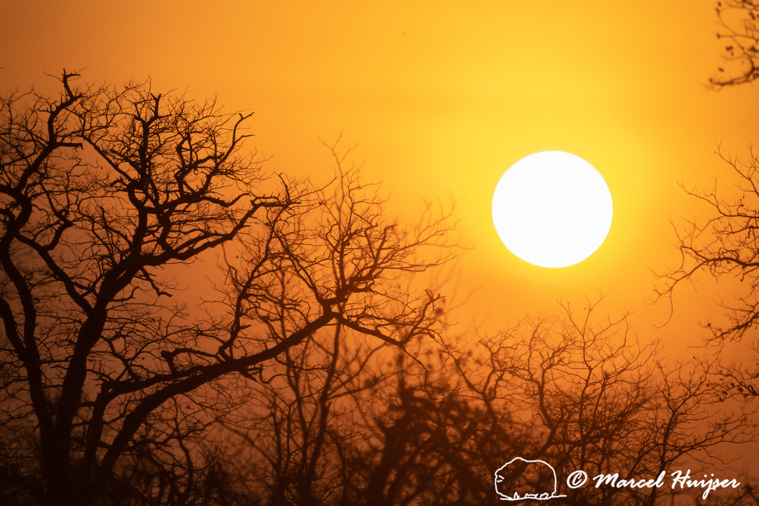 Sunset and trees, Kruger National Park, South Africa