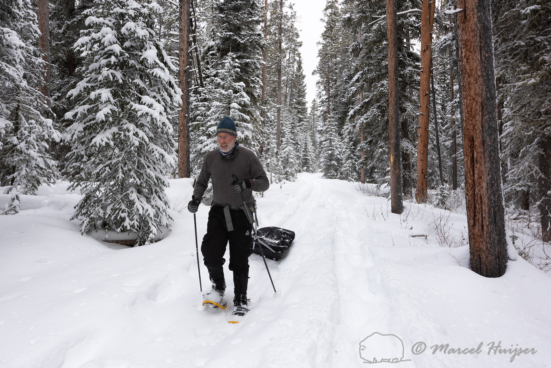 Marcel Huijser snowshoeing and pulling sled, Yellowstone Nationa