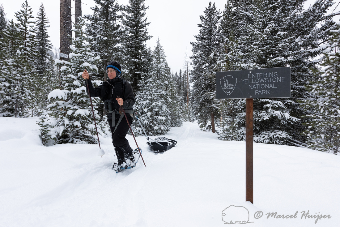 Bethanie Walder snowshoeing and pulling sled, Yellowstone Nation