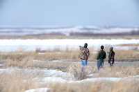 People watching the snow geese (Chen caerulescens) migration, Mo