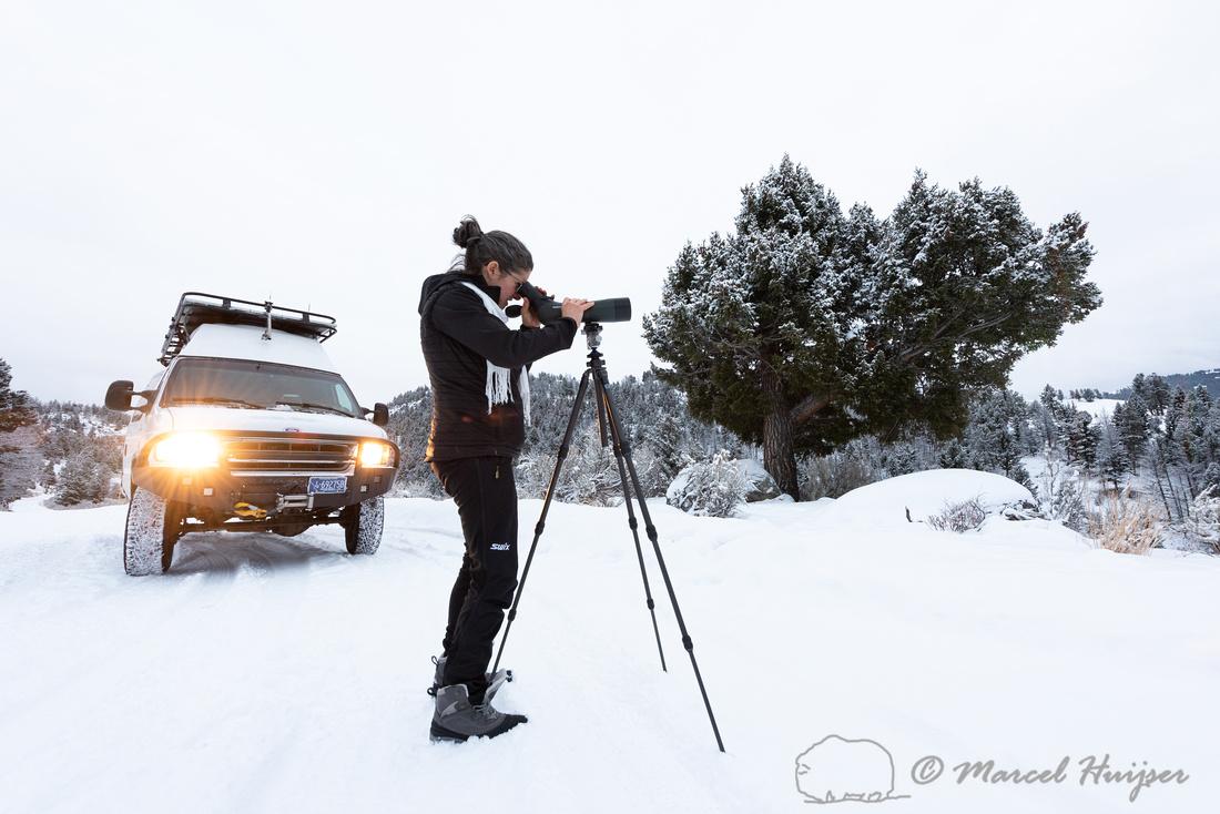 Bethanie Walder spots wildlife, Wyoming