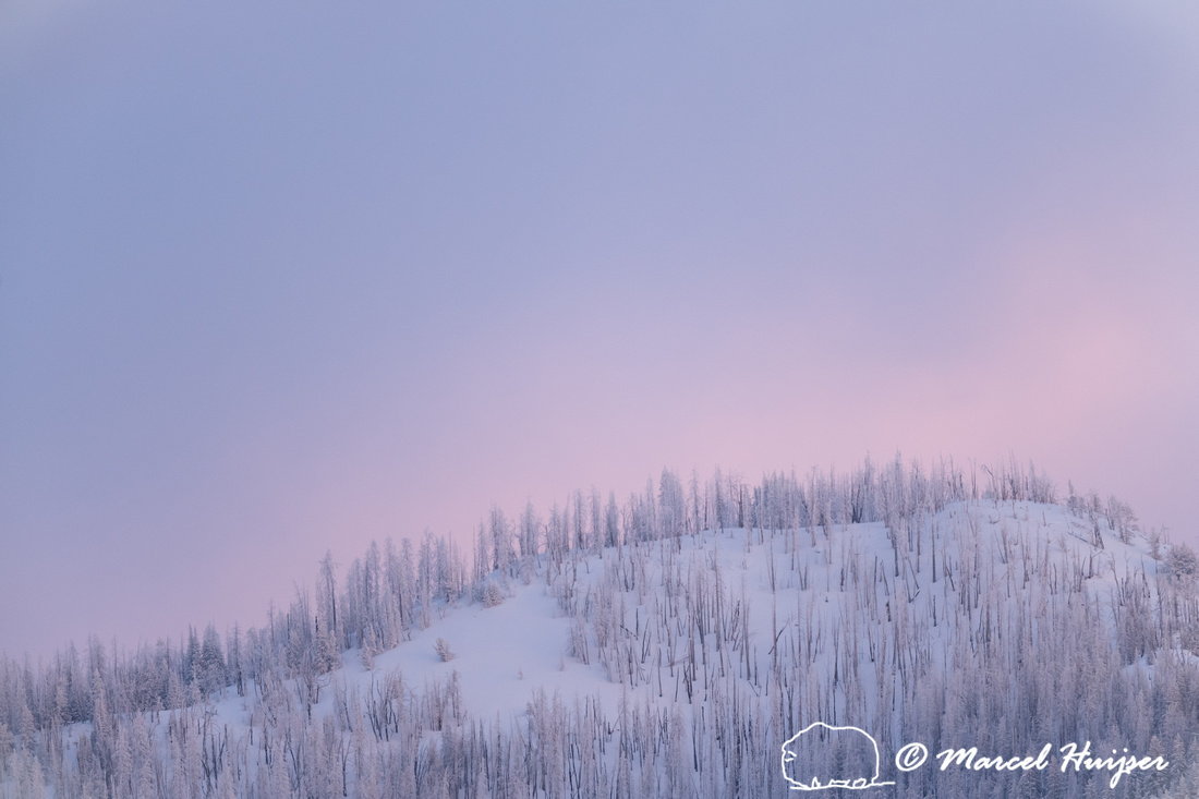 Snow covered mountain and pink sky, Wyoming, USA