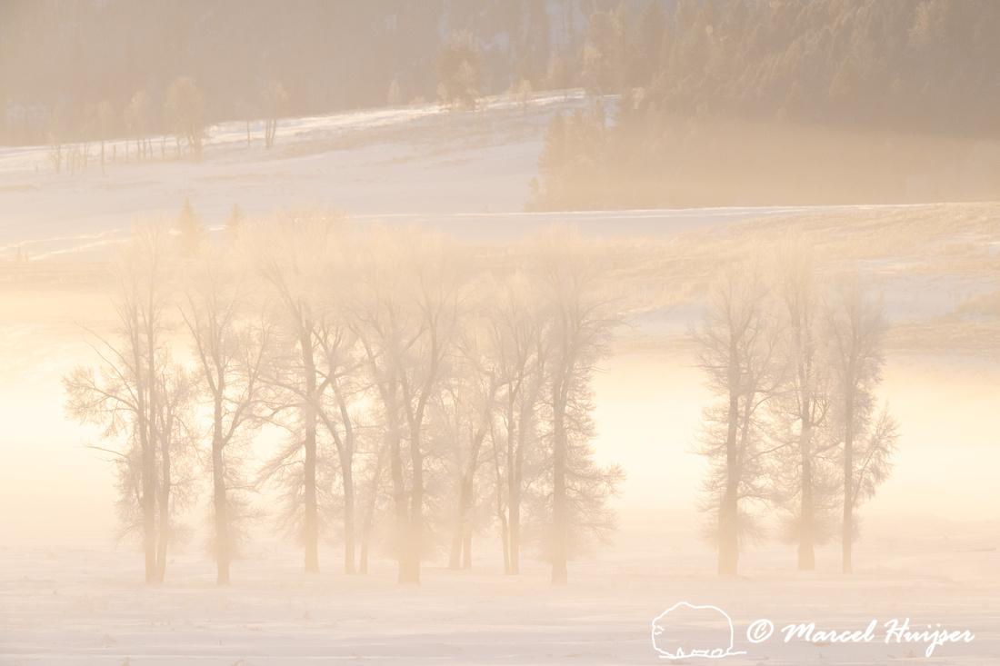 Morning fog and cottonwood trees, Wyoming, USA