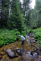 Marcel Huijser looks for salamanders in a creek, Lochsa drainage, Idaho, USA