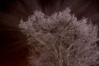 Trees covered in ice (ice fog) at night, Ringebu, Norway