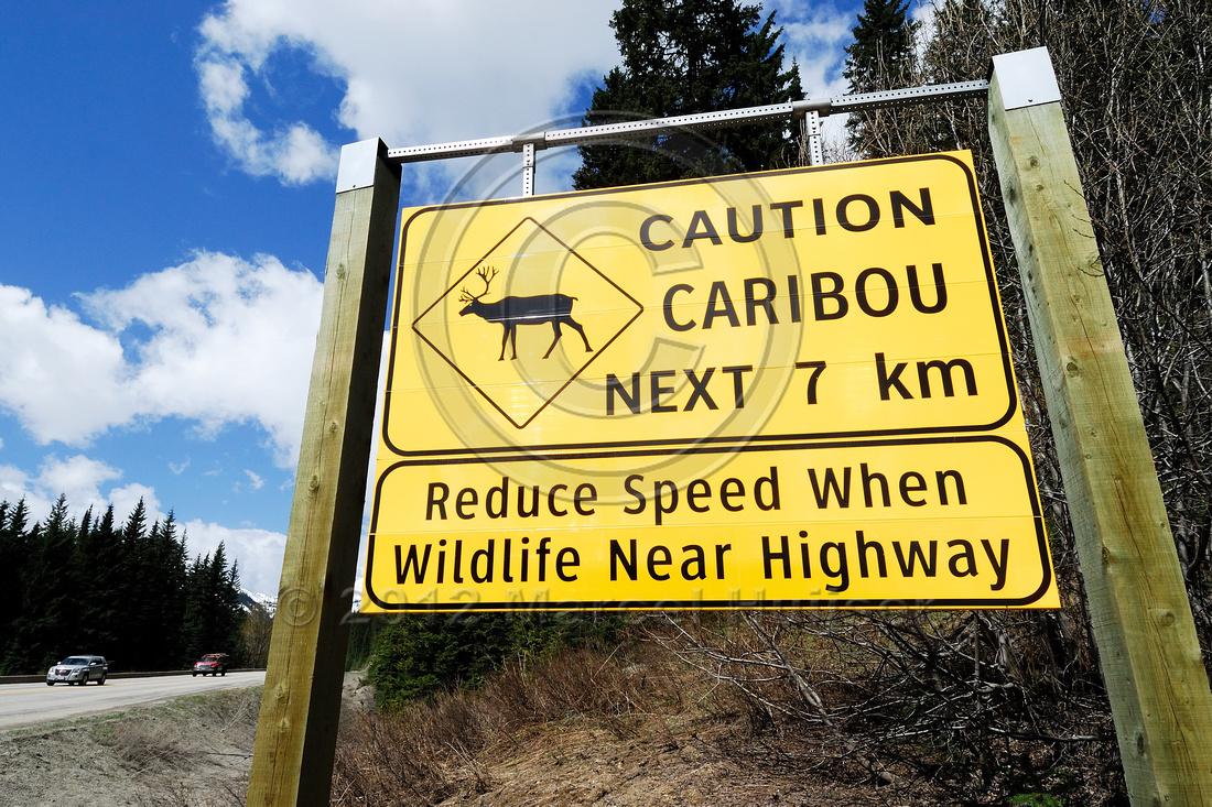 Wildlife warning sign, Caution caribou next 7 km, reduce speed when wildlife near highway, British Columbia, Canada