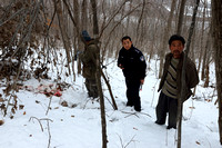 Snowtracking an Amur tiger (Panthera tigris altaica) that killed and ate a dog of a farmer, Jilin Province, China
