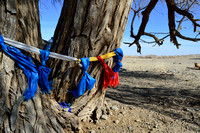 Khataks (ceremonial scarfs) wrapped around a tree, Gobi, Mongolia