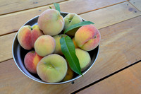Homegrown peaches, Missoula, Montana, USA