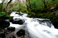 Stream in Glengarriff Forest Nature Reserve, Ireland