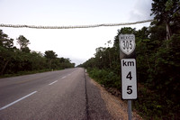 A kilometer post and canopy crossing for arboreal mammals, Nuevo