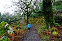 Hiker and hiking trail through native oak woodland, Killarney National Park, Ireland