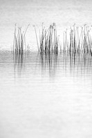 Rushes in water, Necedah National Wildlife Refuge, Wisconsin, USA