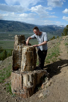 Marcel Huijser points out the growth rings in a petrified tree trunk, Yellowstone Petrified Forest, Specimen Ridge, Yellowstone National Park, Wyoming, USA