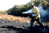 Fire fighter carries smoldering log to already burnt area, Parque Nacional da Serra da Bocaina, São Paulo, Brazil