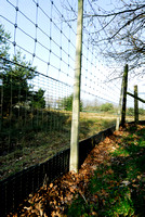 Wildlife fence at ecoduct Woeste Hoeve A50 near Apeldoorn, The Netherlands