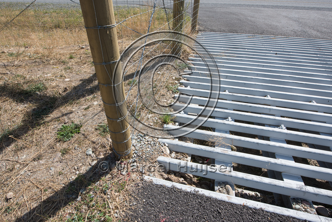 Wildlife guard (cattle guard) for  bighorn sheep (Ovis canadensi