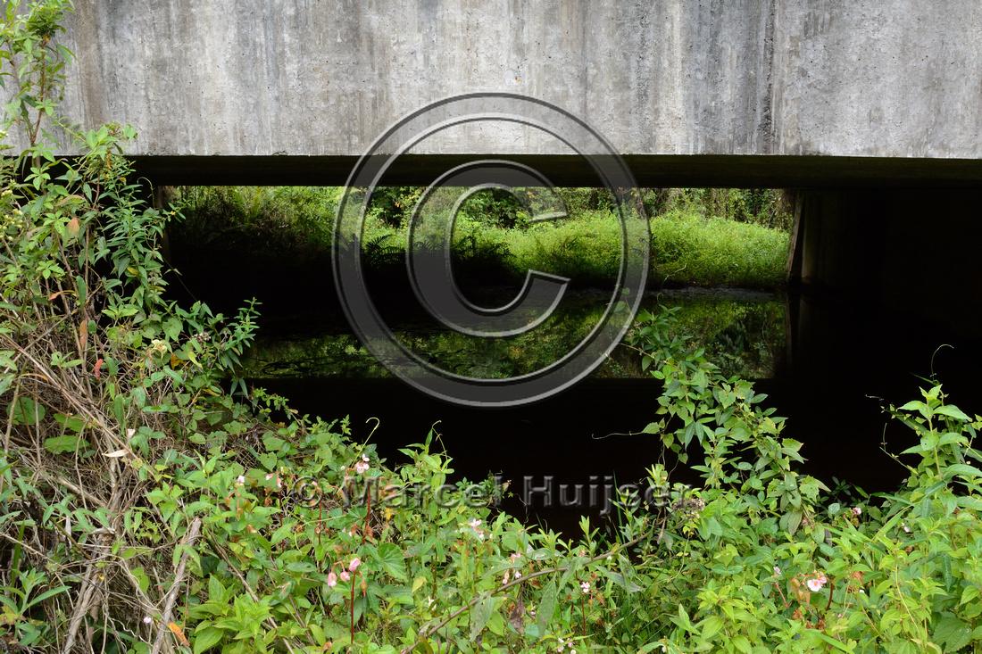 Wildlife underpass, RS-486, Reserva Biológica Mata Paludosa, Rio Grande do Sul, Brazil
