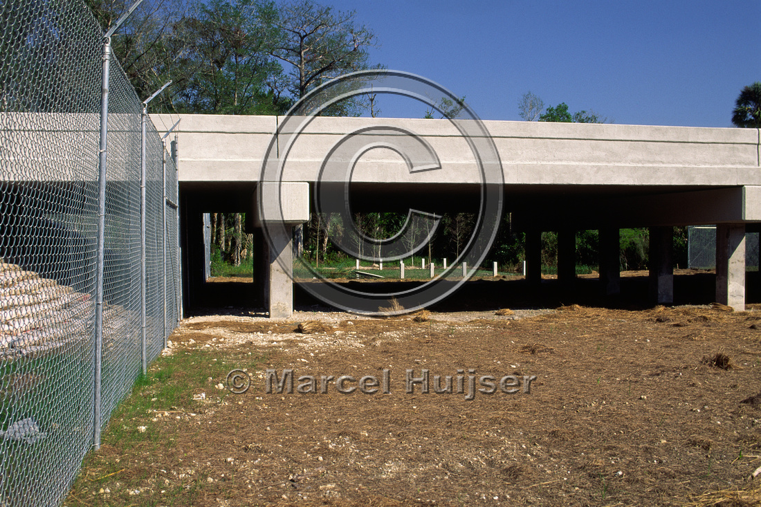 Wildlife underpass for Florida panthers (Puma concolor coryi) just after construction in 1998, SR 29, Florida, USA