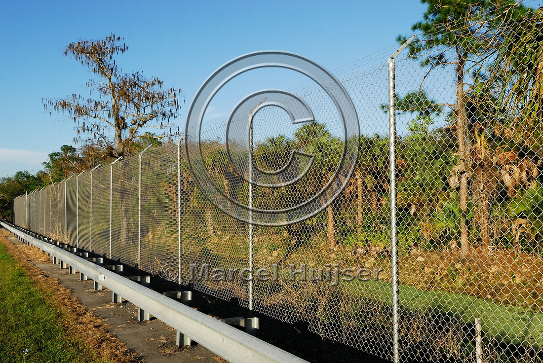 Wildlife fence (3 m (10 ft) high, chain-link) with overhang to keep Florida panthers (Puma concolor coryi) off teh highway, SR 29, Florida, USA