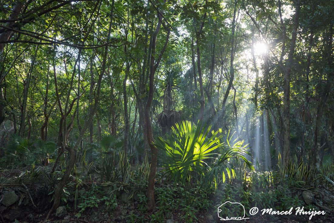 Jungle with sunlight, Quintana Roo, Mexico