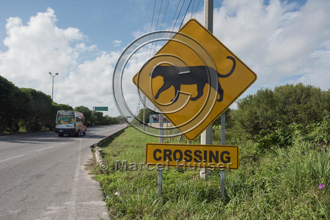 Wildlife warning sign for puma (Puma concolor), Yucatán, Mexico