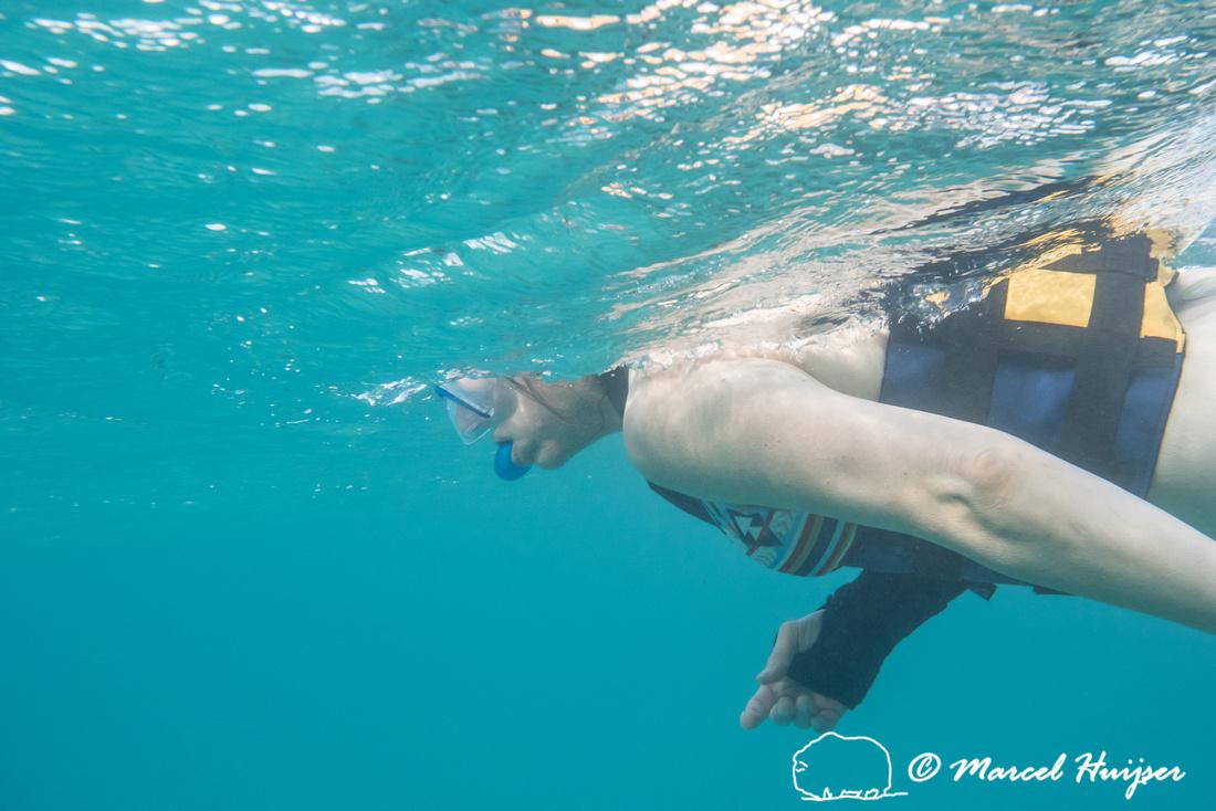Bethanie Walder looking for green sea turtles (Chelonia mydas),