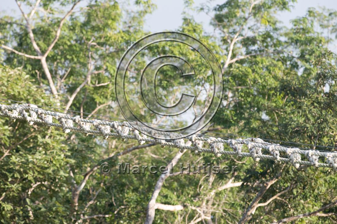 Canopy crossing for arboreal mammals, Nuevo Xcan-Playa Del Carme