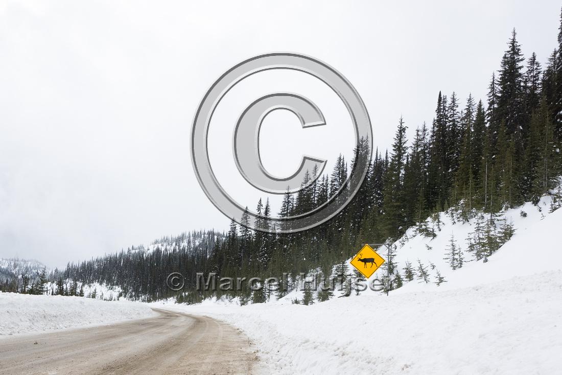 Wildlife warning sign for woodland caribou (Rangifer tarandus ca