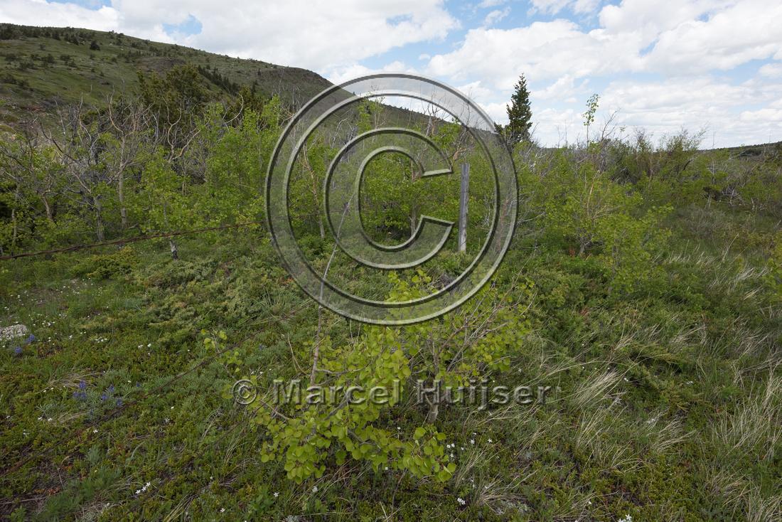 Fence to protect riparian area along a creek, Montana, USA