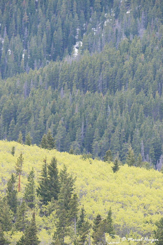 Spring greening on Rocky Mountain front, Montana, USA