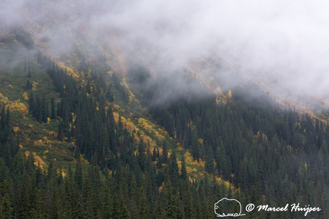Fall colors, Glacier National Park, Montana, USA