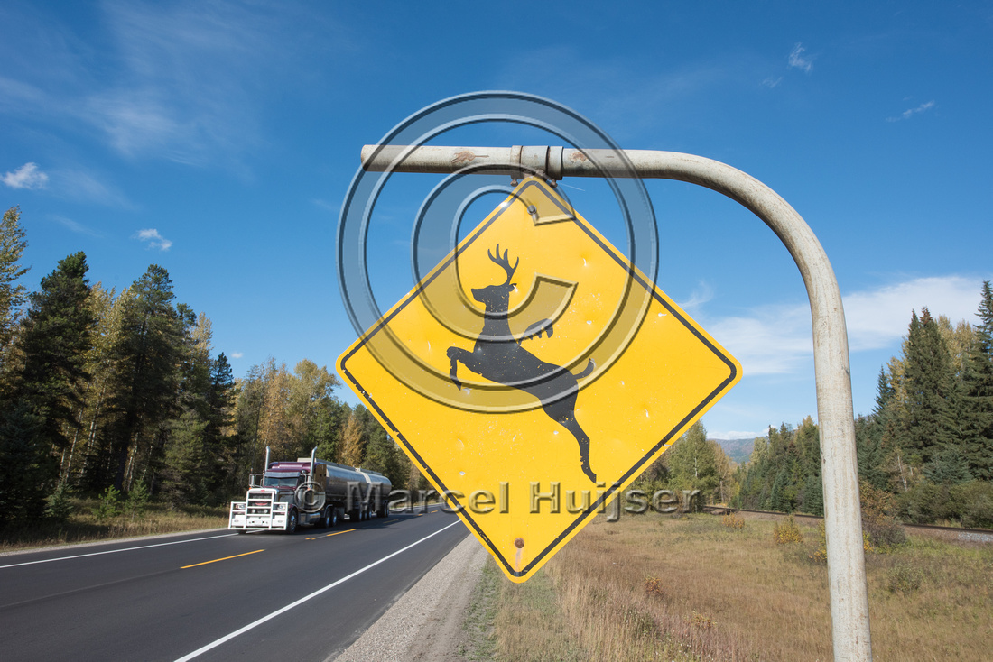 Warning sign for deer (Odocoileus spp.), near Fernie, British Co