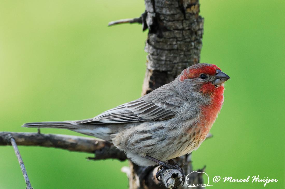 marcel huijser photography backyard wildlife in missoula