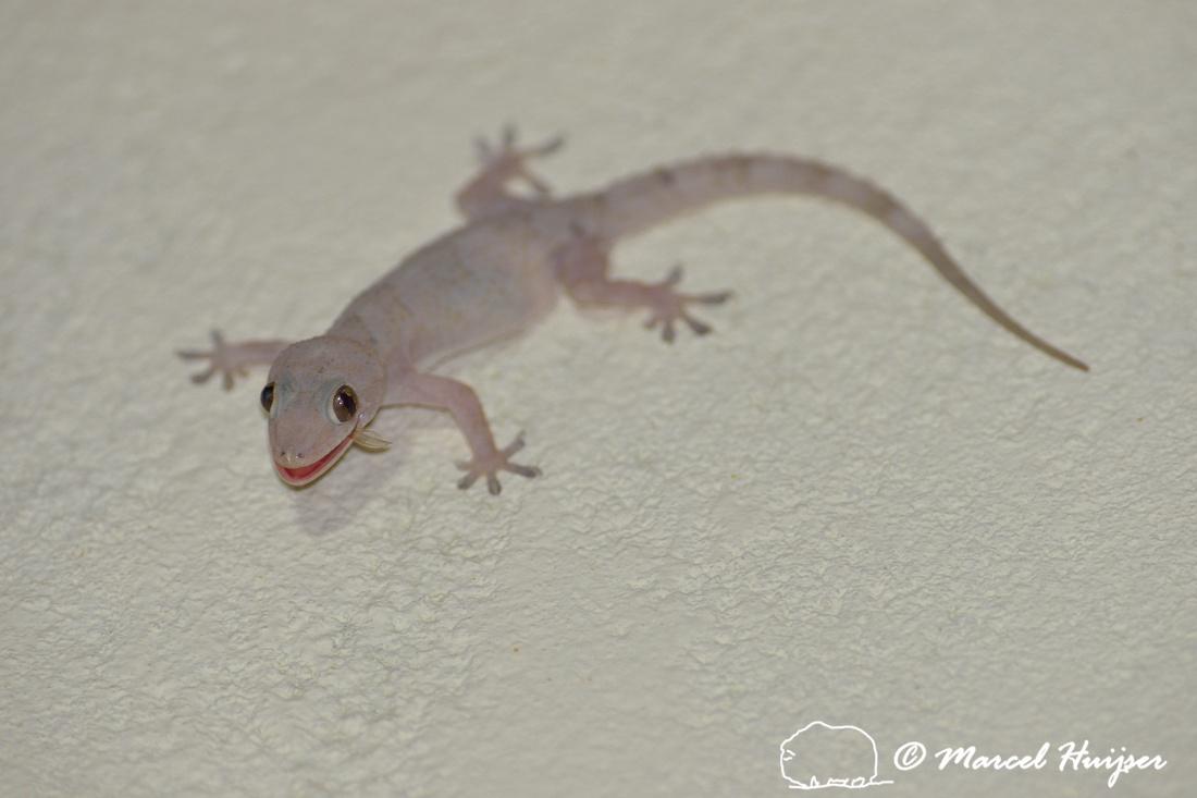 marcel huijser photography | brazilian wildlife: tropical house